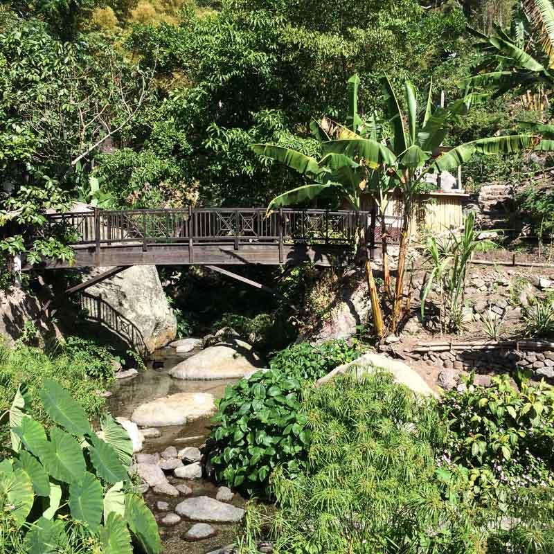 Lush Gardens of Serendipity Holistic Resort